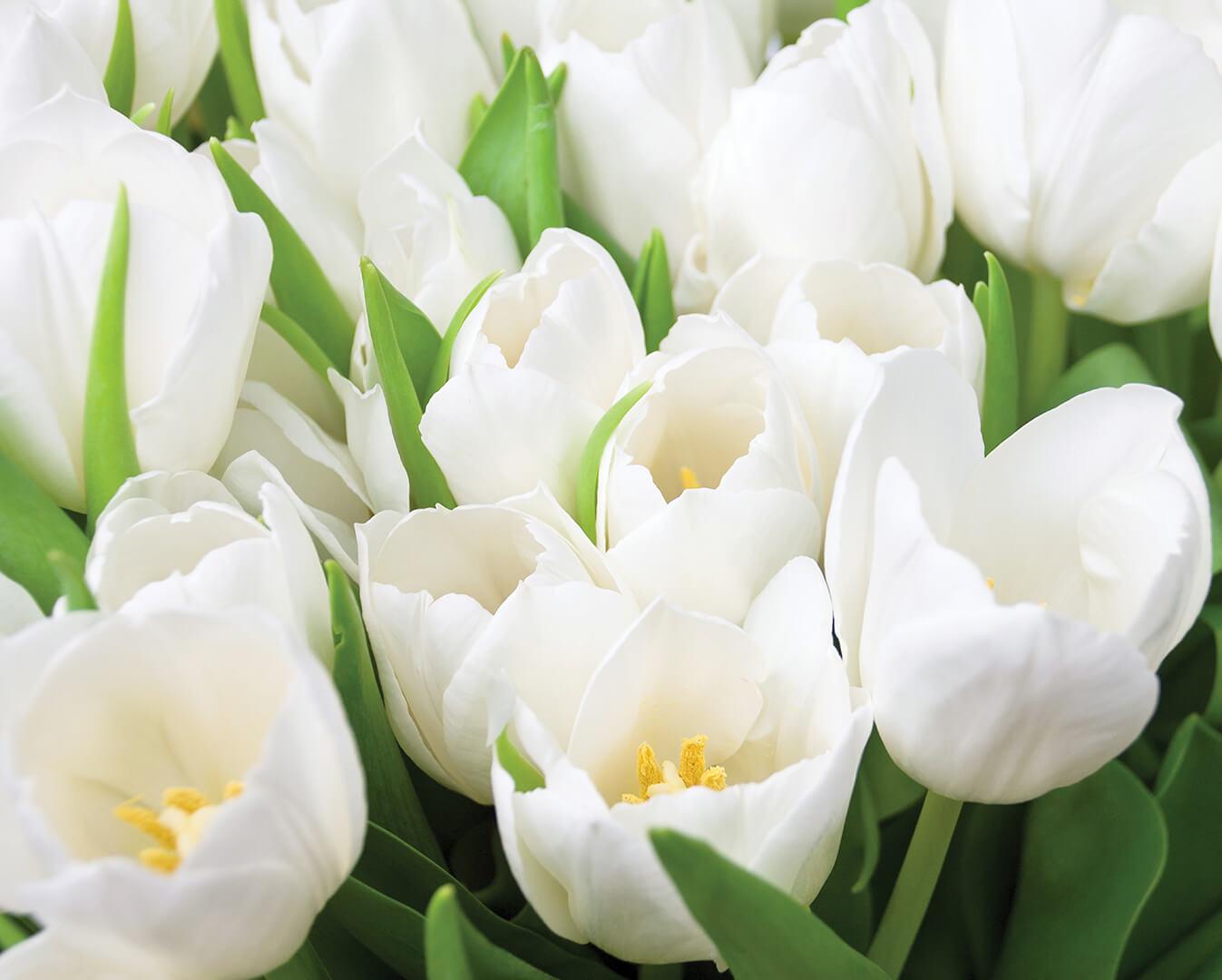 Картинки белых цветов